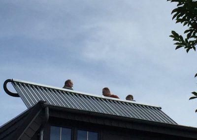 Solaranlagen-Zittau-Loebau-Referenzen37